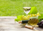 White wine glass and bottle with bunch of grapes in sunny garden
