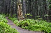 Winner Creek Trail 2