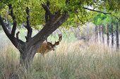 Deer Hiding behind Tree