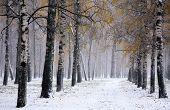 Snowstorm In Golden Autumn