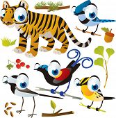 vector cartoon animal set: tiger and birds: bird of paradise, warbler, jay and wagtail