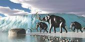 Glacier Mammoths