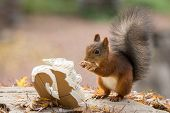 Squirrel Cook Book