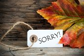 Autumn Background With Label Sorry