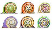 Group Of Colorful Cocnrete Gastropod