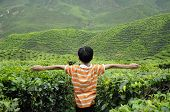 image of cameron highland  - CAMERON HIGHLAND, MALAYSIA - DECEMBER 14, 2014: A child waving hand in the tea plantation is located in Cameron Highland, Malaysia. Cameron Highland is the most famous tea plantation in Malaysia. It is located in Pahang State in Malaysia.