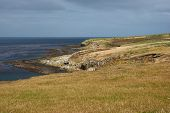picture of falklands  - Grassy meadows on the coast of Bleaker Island in the Falkland Islands - JPG