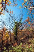 picture of crimea  - Beautiful tree - JPG