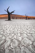 foto of petrified  - Deadvlei trees - JPG