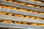 image of corn cob close-up  - Old corn cob in stack. Corn cob in a wooden silo.