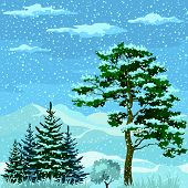 pic of fir  - Seamless Horizontal Christmas Background - JPG