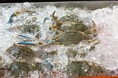 stock photo of blue crab  - Blue crabs on ice in open buffet restaurant - JPG