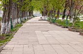 stock photo of long distance  - long tree alley with a disappearing footpath - JPG