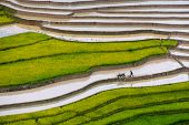 stock photo of northeast  - Mu Cang Chai is a rural district of Y�n B�i Province, in the Northeast region of Vietnam.In Mu Cang Chai there are many terraced fields (mainly for rice), creating amazing landscapes which stretch down the mountain sides