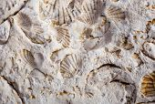 picture of exoskeleton  - coquina background old fossil limestone resources paleontology ancient wall - JPG