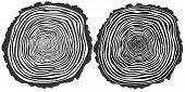 image of cutting trees  - Tree rings - JPG
