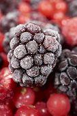 pic of frozen  - Macro shot of a frozen blackberry on other frozen berry fruits - JPG