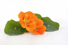 stock photo of nasturtium  - Small bouquet of edible orange nasturtium flowers and leaves on white wood rustic table for floral or salad ingredient - JPG