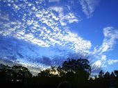 Sky At Dusk Over Gum Trees poster
