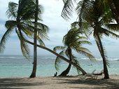 Beach In The Caribean