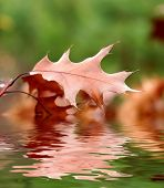 autumn leaf reflected in the water
