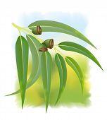 Eucalyptus Branch On White Background. Vector Illustration.