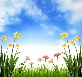 Spring meadow scenery