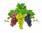 Three various grapes as decorative motif