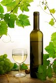 White wine and grapevine on white background