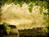 Grunge image of wine grapes and vineyard