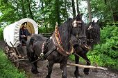 RATIBORICE, CZECH REPUBLIC - MAY 22: Imperial maneuvers - Reconstruction of historic event, covered wagon with horses on way to battlefield, May 22, 2010 in Ratiborice, Czech Republic