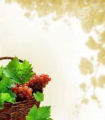 Fundo de uvas com cesta de vime cheia de folhas e uvas para vinho maduras