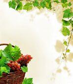 Desenho de fundo com uvas na cesta e decoração fresca videira