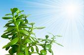 Plant sunny illustration.