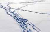 Campo de la nieve con pasos.