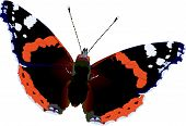 Red Admiral.Eps