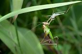Bush-cricket Metamorphosis