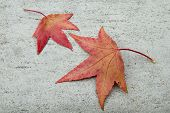 Two Fall Leafs On Grey Stone