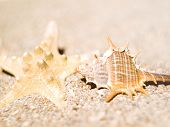 Two Clam In The Sand