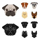 Постер, плакат: Muzzle Of Different Breeds Of Dogs dog Breed Stafford Spitz Risenschnauzer German Shepherd Set Co