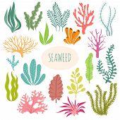 Seaweeds. Aquarium Plants, Underwater Planting. Vector Seaweed Silhouette Isolated Set. Illustration poster