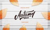 Autumn Sale Background Layout Design. Autumn Lettering, Fall Leaves And Wooden Background. Fall Sale poster