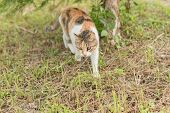 kitty on the grassland, domestic cat in the outdoor poster
