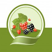 fresh berries illustration, vector label