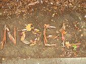 NOEL written in leaves and bark