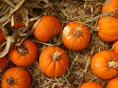 group of small pumpkins in hay