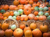 Many Large Orange Pumpkins Lie In The Straw. Autumn Street Decoration. Many Large Orange Pumpkins Li poster
