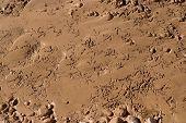 Birds footprints in brown mud
