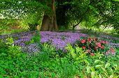 Loch Leven Flowers
