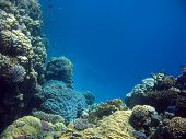 coral reef with hard corals